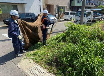雑草刈り処分 人生初の草刈り機に奮闘している 実習生たち