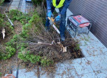 愛知県名古屋市名東区 エントランス前 伐採工事